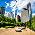 Picture Of Chicago Skyline With Millennium Park Trees by Paul Velgos