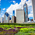 Picture Of Lurie Garden Flowers With Chicago Skyline by Paul Velgos