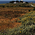 Piedras Blancas Lighthouse by Judy Vincent