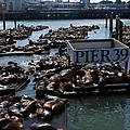 Pier 39 San Francisco Bay by Aidan Moran