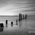 Pier Into The Past Black And White by Michael Ver Sprill