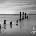 Pier Into The Past Bw 16x9 by Michael Ver Sprill