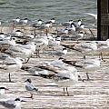 Pier Pressure by Elizabeth Fontaine-Barr