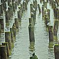 Piers And Birds by PatriZio M Busnel