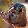Pig by David Stribbling