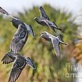 Pigeon Brigade by Deborah Benoit