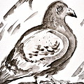 Pigeon I Sumi-e Style by Beverley Harper Tinsley