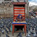 Pigeon Lady by Arkamitra Roy