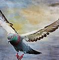 Pigeon On Wing by Deborah Benoit