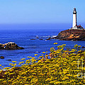 Pigeon Point Lighthouse Panoramic by Mike Nellums