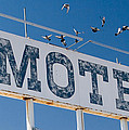 Pigeon Roost Motel Sign by Scott Campbell