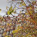 Pigeon Tree At The Taj by Kantilal Patel