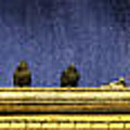 Pigeons On Yellow Roof by Peter v Quenter