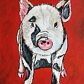 Piggy by Kenny Francis