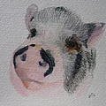 Piggy Pet Portraits Original Watercolor Memorial Made To Order by Shannon Ivins