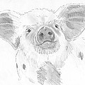 Piglet   by Mike Jory