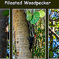 Pileated Woodpecker by Nancy L Marshall