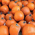 Piles Of Pumpkins by Nina Silver