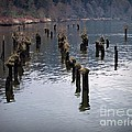Pilings by Chalet Roome-Rigdon