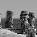 Pilings Too by Paul Pecora