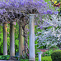 Pillars Of Wisteria by Michael Hubley