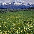 1a9210-pilot Peak And Wildflowers by Ed  Cooper Photography