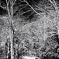 Pine Barrens Path by John Rizzuto