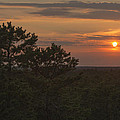 Pine Barrens Sunset Nj by Terry DeLuco