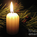 Pine Bough And Candle by Ann Horn