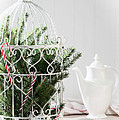 Pine Branches Birdcage by Amanda Elwell