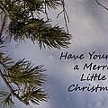 Pine Cone Christmas Card by Joanne Smoley