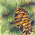 Pine Cone by Terry Banderas