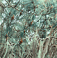 Pine Cones And Lace Lichen by Angela Stanton