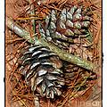 Pine Cones by Judi Bagwell