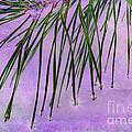 Pine Drops by Judi Bagwell