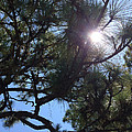 Pine Face With Sun Eye by Nicki La Rosa