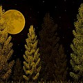 Pine Forest Moon by David Dehner