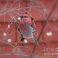 Pine Grosbeak by Leone Lund