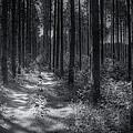 Pine Grove by Scott Norris