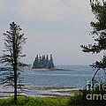 Pine Island by Ray Konopaske