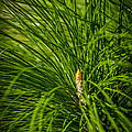 Pine Needles by Marvin Spates