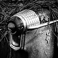 Pine Needles On Tail Light In Black And White by Greg Mimbs