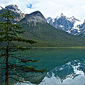 Pine Over Emerald Lake Reflection In Yoho National Park-british Columbia-canada by Ruth Hager