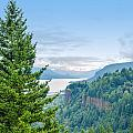 Pine Tree And Columbia River Gorge by Jess Kraft