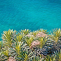 Pine Tree Branches With Turquoise Sea Background by Brch Photography