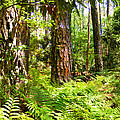 Pine Trees And Ferns by Duane McCullough