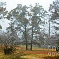 Pine Trees In Mist - Digital Paint 1 by Debbie Portwood