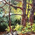 Pine Trees In Sunlight by Volodymyr Klemazov