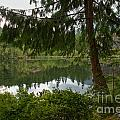 Pine Trees Over Starvation Lake by Adam Jewell