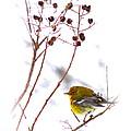 Pine Warbler-img-2143-001 by Travis Truelove